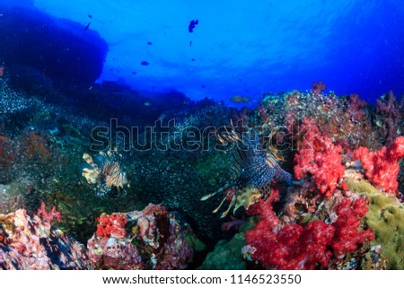 Beautiful Red Lionfish swimmong on a colorful tropical coral reef #1146523550
