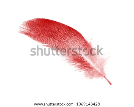 Beautiful red maroon feather isolated on white background #1069143428