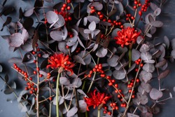 Beautiful red Narine and Ilex and purple eucalyptus flowers macro texture, close up view
