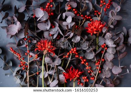 Beautiful red Narine and Ilex and purple eucalyptus flowers macro texture, close up view  Stok fotoğraf ©