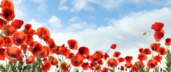 Beautiful red poppy flowers under blue sky with clouds, banner design
