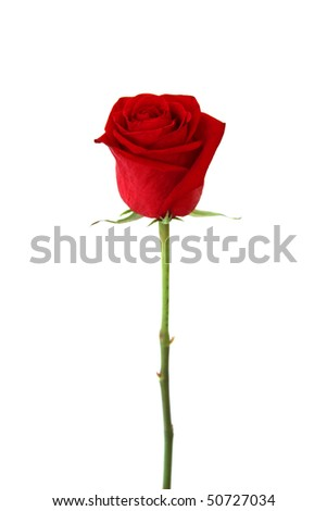 Stock Photo Beautiful red rose isolated on white background