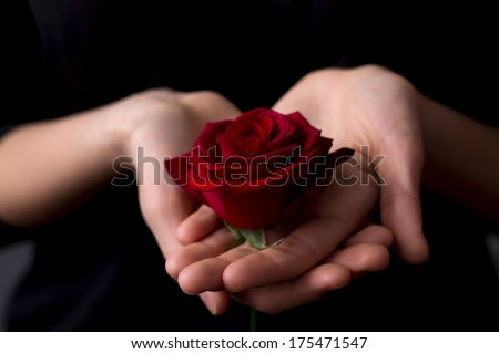 beautiful red rose on the girl\'s hand on a black background