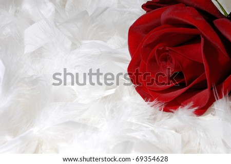 Beautiful red rose on white feathers background conceptual still life