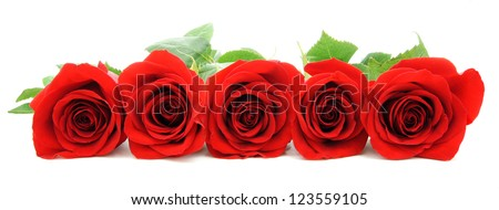 Beautiful red roses arranged as a horizontal border over white