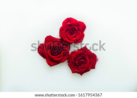 Beautiful red roses in a milk bath. Concept of spa treatments, relaxation, spa treatments, therapy