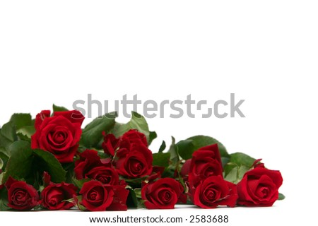 Red and white roses Wallpaper for Mobile stock photo : Beautiful red roses on a white background