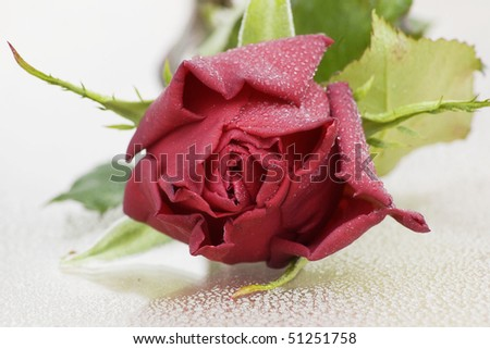 Beautiful red roses with some water drops