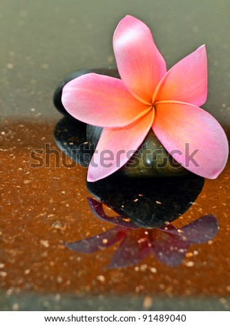 Beautiful red tropical flower on spa stone