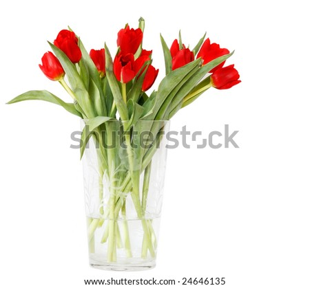 beautiful red tulips in crystal vase