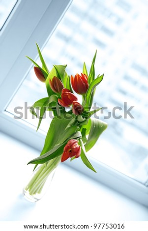 Beautiful red tulips in vase with light from window