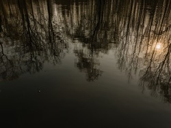 Beautiful reflection of trees in the forest lake