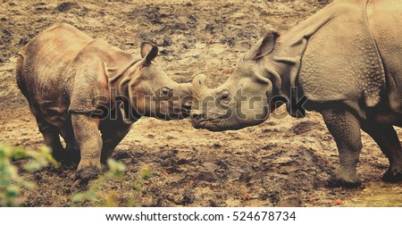 Beautiful retro photography of One Horned Rhinoceros. Old photo. Close up photo of an adult rhino and a calf rhino. Amazing wildlife of a National Reserve. Creative artwork. Matte. Wonderful vintage