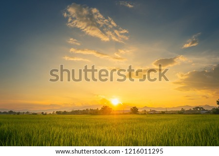 Beautiful rice field and sunset at Thailand.  #1216011295
