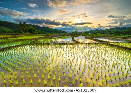 Beautiful rice fields ストックフォト ©