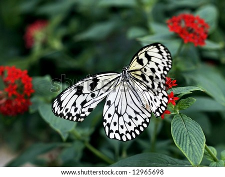 beautiful rice paper butterfly
