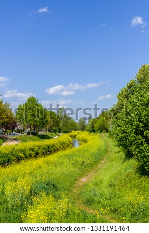 Beautiful river/creek with a road near a forest with beautiful trees and yellow plants with a nice blue sky #1381191464