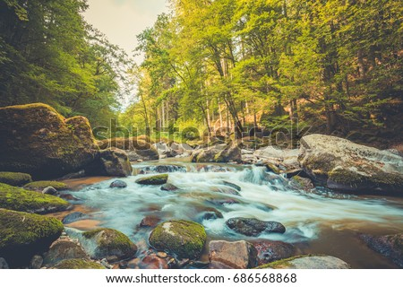 Beautiful river in forest nature. Peaceful toned nature background