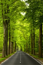 Beautiful road in the middle of beautiful trees
