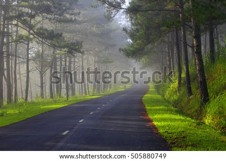 Beautiful road through pine forest in morning sunlight - Shutterstock ID 505880749