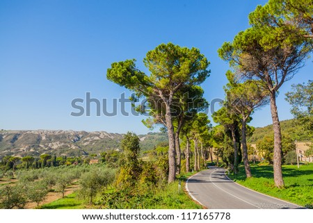 Beautiful road with pine trees Tuscany, Italy - stock photo