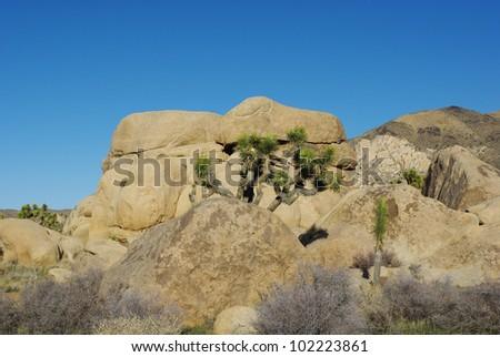Beautiful rocks and Joshua, Joshua Tree National Park, California