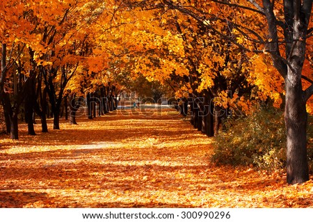 Beautiful romantic alley in a park with colorful trees, autumn landscape #300990296