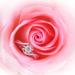 Beautiful romantic Pink Rose with diamond wedding ring on pink background