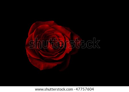 stock-photo-beautiful-romantic-red-rose-on-black-with-negative-space-47757604.jpg