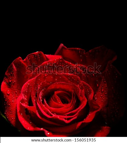 Beautiful rose and color fabric isolated on black