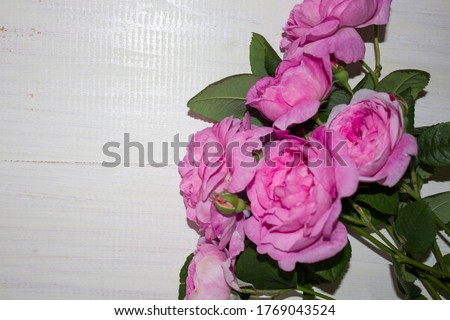 Beautiful rose flower in garden. Rose flower background. Roses flower texture. Lovely rose. Roses in tropical garden. Colorful roses flower. Pink roses on a white wooden background. copyspace