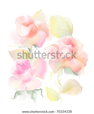 beautiful white rose flowers. stock photo : Beautiful rose