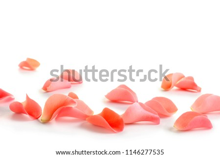 Beautiful rose petals on white background #1146277535