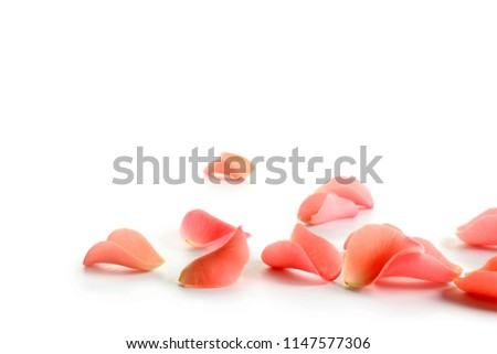 Beautiful rose petals on white background #1147577306