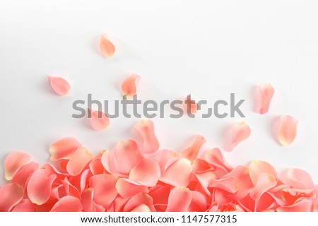 Beautiful rose petals on white background #1147577315