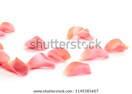 Beautiful rose petals on white background #1149385607