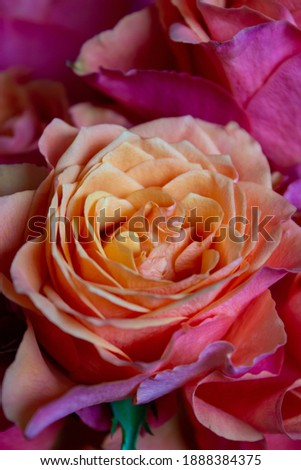 Beautiful roses bouquet Happy st valentine's day. Close up, copy space, front view date 14 february Stockfoto ©
