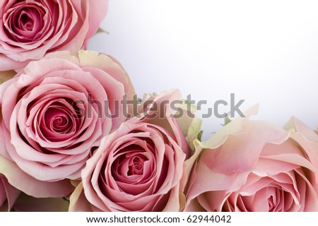 Beautiful roses in a row with a white card close-up