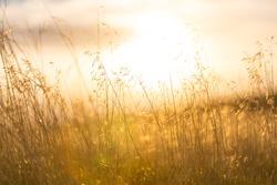 Beautiful rural landscape-meadow at sunrise