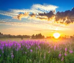 beautiful rural panorama landscape with sunrise  and  blossoming meadow. purple flowers flowering on spring field. wild flowers blooming on sunset. summer panoramic view