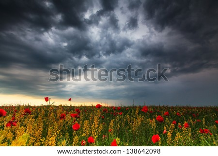 Beautiful rural scenery with wild flowers and ominous stormy sky