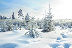 beautiful rural winter landscape with the forest