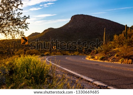Beautiful Saguaro National Park west of Tucson, Arizona in the Sonoran Desert. A scenic roadway with curves and a mountain covered in cactus and other arid plant life near sunset. Picture Rocks road.