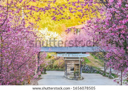 Beautiful Sakura Blooming At The Entrance Of Smangus Tribe (With Chinese Characters Of Welcome To The Tribe Of God On The Sign Bar), Jianshi, Hsinchu, Taiwan