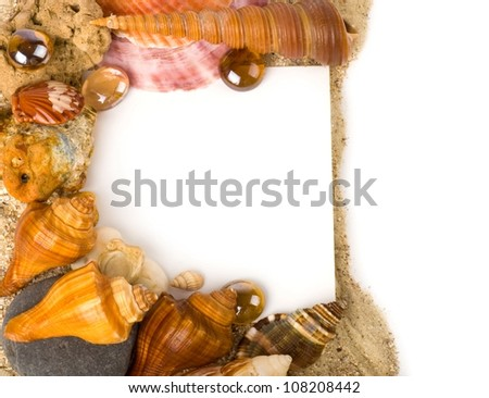 Beautiful sand background with exotic shell