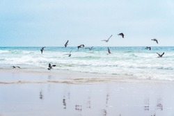 Beautiful Sand Beach and Flock of Birds Flying Over the Sea