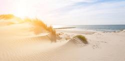 Beautiful sand dunes on the North Sea coast in Renesse, Zeeland, Holland