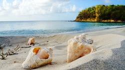 Beautiful sandy beach with blue sea and sea shells at Anse La Roche Bay on Carriacou island, Grenada, Caribbean sea