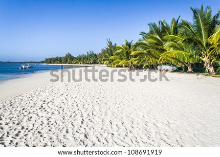 Beautiful sandy beach with coconut palm trees