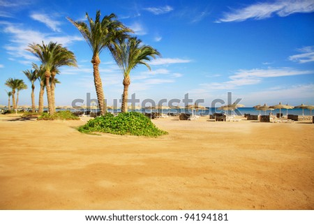 Beautiful sandy beach with palms in Sharm El Sheikh, Egypt